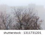 tops of the deciduous trees... | Shutterstock . vector #1311731201