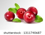 cranberry with leaves on... | Shutterstock .eps vector #1311740687