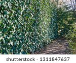 the fence from a grid the chain ... | Shutterstock . vector #1311847637