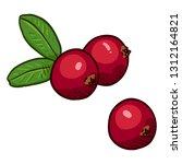 vector set of cartoon cowberry | Shutterstock .eps vector #1312164821