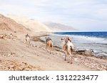 camels walking along the coast... | Shutterstock . vector #1312223477