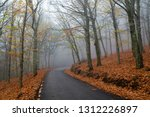 colorful chestnut tree forest ... | Shutterstock . vector #1312226897