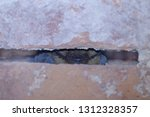 The Serotine Bat  Eptesicus...