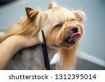 female groomer haircut... | Shutterstock . vector #1312395014