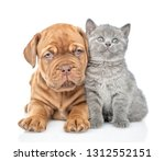 Stock photo puppy lying with funny kitten in front view and looking up isolated on white background 1312552151