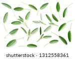 Fresh Sage Herb Isolated On...