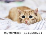 Stock photo ginger cat on the bed 1312658231