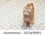 Stock photo ginger cat on the bed 1312658591