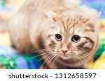 Stock photo ginger cat on the bed 1312658597