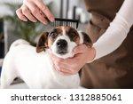 female groomer taking care of... | Shutterstock . vector #1312885061