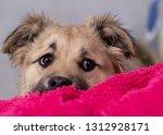 cute shaggy puppy | Shutterstock . vector #1312928171