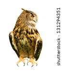Stock photo owl isolated on white 131294351
