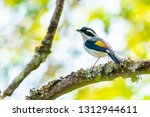 very cute blyth's shrike... | Shutterstock . vector #1312944611