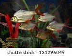 School Of Aquarium Fish