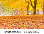Colorful Autumn Leaves With...