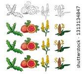 natural herbs  vector | Shutterstock .eps vector #1313134847