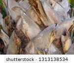 detail texture of trunk palm... | Shutterstock . vector #1313138534