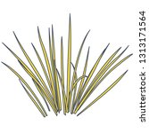 outlined vector isolated reed.... | Shutterstock .eps vector #1313171564