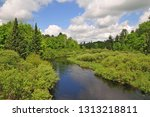 A lush stream edge in the Headwaters Wilderness Area of the Chequamegon-Nicolet National Forest, Wisconsin