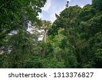 wide angle view of rainforest... | Shutterstock . vector #1313376827