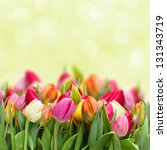 colorful beautiful tulips... | Shutterstock . vector #131343719