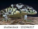 Bromeliad Alligator Lizard  ...
