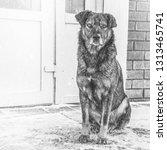 black yard dog  with shaggy... | Shutterstock . vector #1313465741