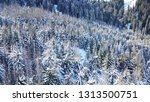 top view of the winter forest.... | Shutterstock . vector #1313500751