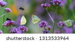 Butterflies And Bumblebees On...