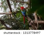 colorful macaw parrot sits on... | Shutterstock . vector #1313778497