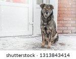 black yard dog  with shaggy... | Shutterstock . vector #1313843414