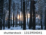 snow covered pine tree forest... | Shutterstock . vector #1313904041