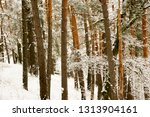 snow covered pine tree forest... | Shutterstock . vector #1313904161
