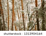 snow covered pine tree forest... | Shutterstock . vector #1313904164