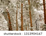 snow covered pine tree forest... | Shutterstock . vector #1313904167
