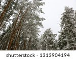 snow covered pine tree forest... | Shutterstock . vector #1313904194