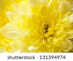 Macro Close Up Shot Of Yellow...