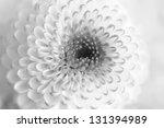 Monochrome Macro Close Up Shot...