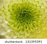 Macro Close Up Shot Of Green...
