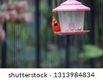 red male northern cardinal... | Shutterstock . vector #1313984834