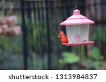 red male northern cardinal... | Shutterstock . vector #1313984837