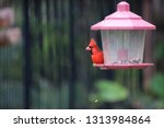 red male northern cardinal... | Shutterstock . vector #1313984864