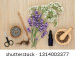 lavender and valerian herbs  ...   Shutterstock . vector #1314003377