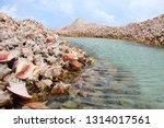 Conch Shell Island  Anegada