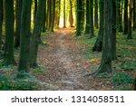 beautiful green forest in summer | Shutterstock . vector #1314058511