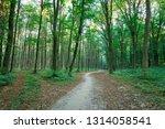 beautiful green forest in summer | Shutterstock . vector #1314058541