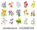 Watercolor Wild Flower Clip Art ...