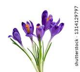 bouquet of beautiful spring...   Shutterstock . vector #1314129797