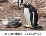female gentoo penguins at the... | Shutterstock . vector #131419439