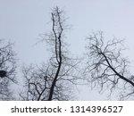 bare trees against gray winter... | Shutterstock . vector #1314396527